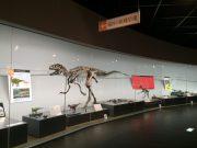 押入れ福井の恐竜