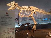 押入れ恐竜1